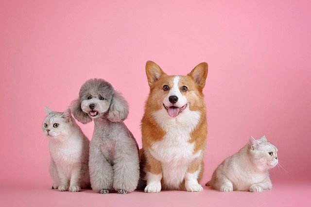 2 cats and 2 dogs posing for photo